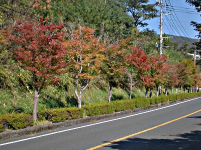 ホテル前の国道223号の紅葉