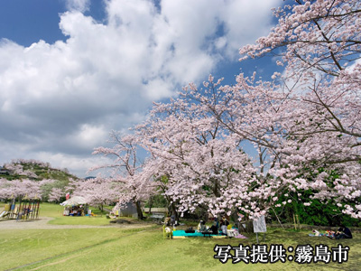 丸岡公園桜イメージ