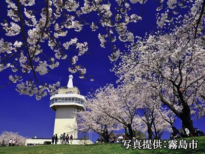国分城山公園 桜イメージ