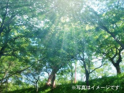 森イメージ
