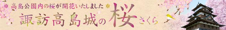 諏訪高島城の桜ページ
